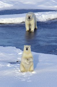 A polar bear mother on the ice with her cub.