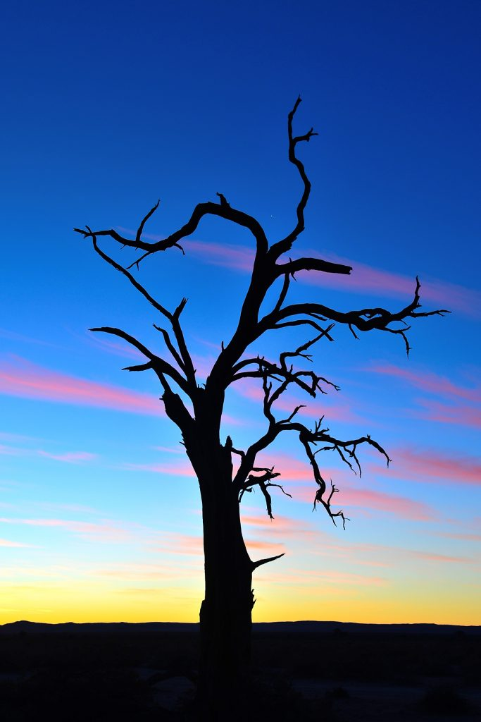 Dead tree in Namibia