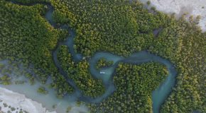 Are Mangroves your Next Destination?