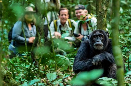 Test Your Chimpanzee IQ—Take the Quiz!