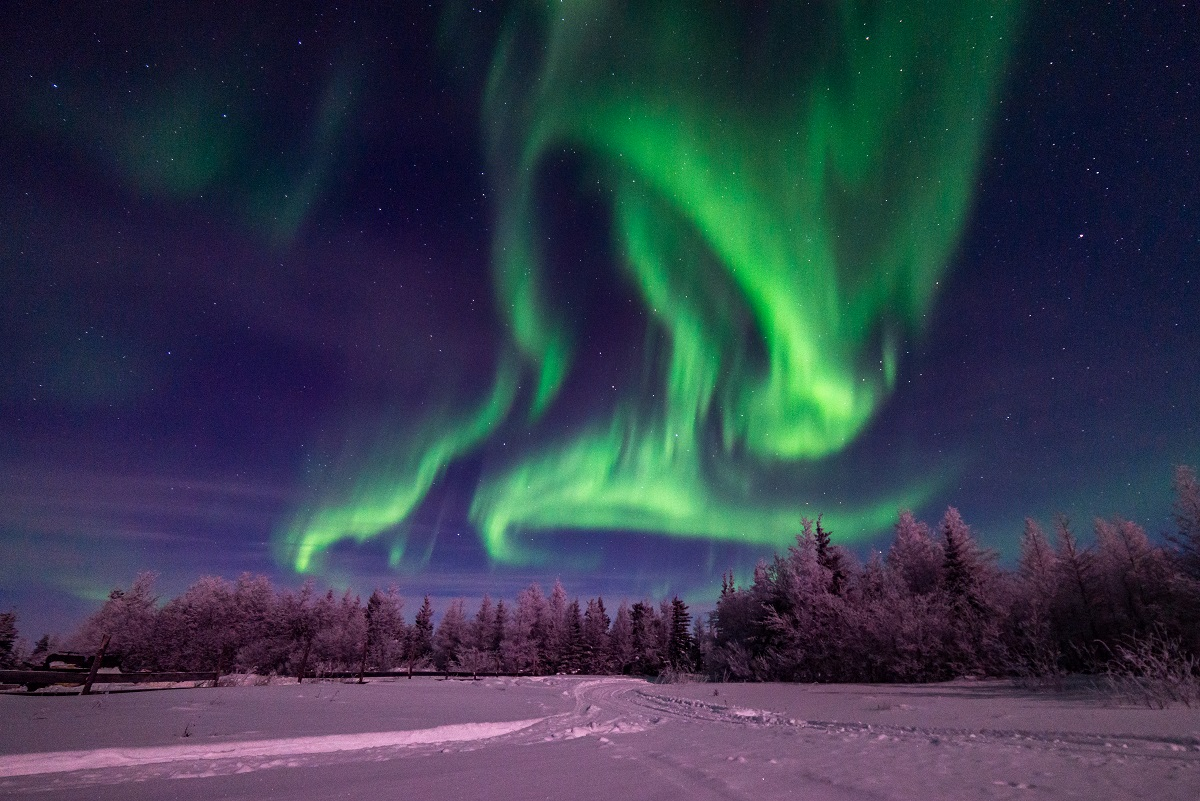 The northern lights above the Boreal forest in Churchill, Canada.
