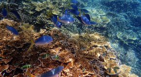 This Summer, Make Sure Your Sunscreen Protects Coral Reefs