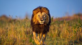 What are the Big Five and Where Can I See Them?