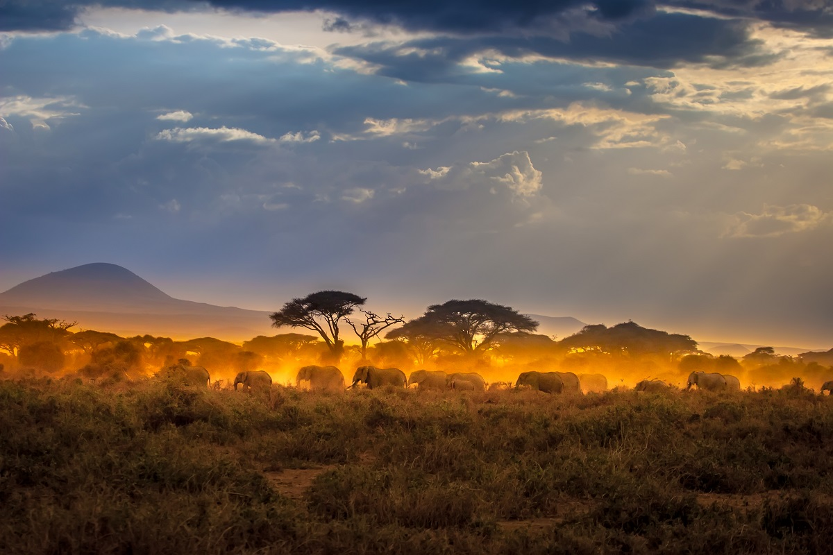 Elephants as sunlight streams down on the African plains.
