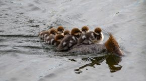 Wildlife Photo of the Week: Hitching a Ride