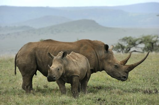New Study Shows Wildlife Tourism Worth Five Times More Than Poaching