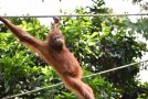 Why Exploring Borneo Changed My Life