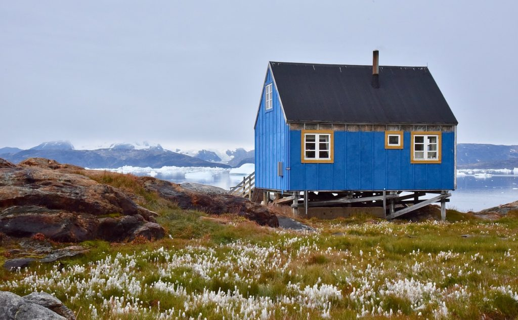 Small blue house and flower fields in Greenland.