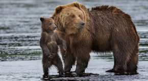 Wildlife Photo of the Week: Mother and Child
