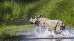 Celebrate World Rhino Day with Our Quiz!