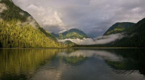 See Three of the World's Most Beautiful Forests on Natural Habitat Adventures Tours