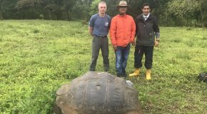 Sustainable Farm Contributes to Galapagos Giant Tortoise Conservation
