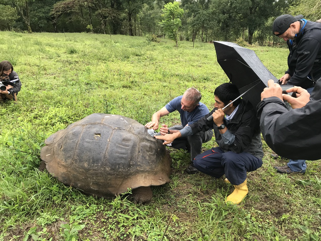 Tagging Steve, a male tortoise that is estimated to be more than 120 years old.
