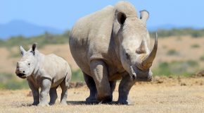 New Rhino Discovery Itinerary on <br> Secluded Botswana Safari