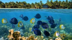 Belize's Barrier Reef, One of the Best Snorkel Spots in the World