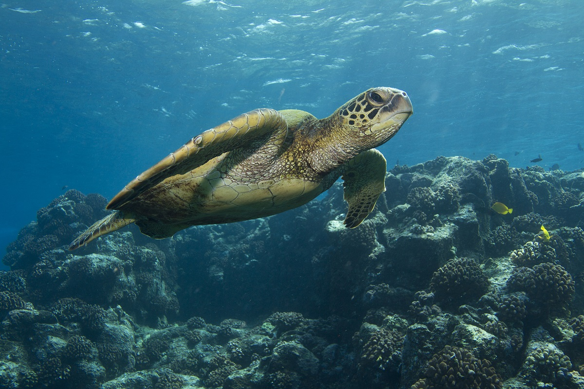 swim with turtles in Belize