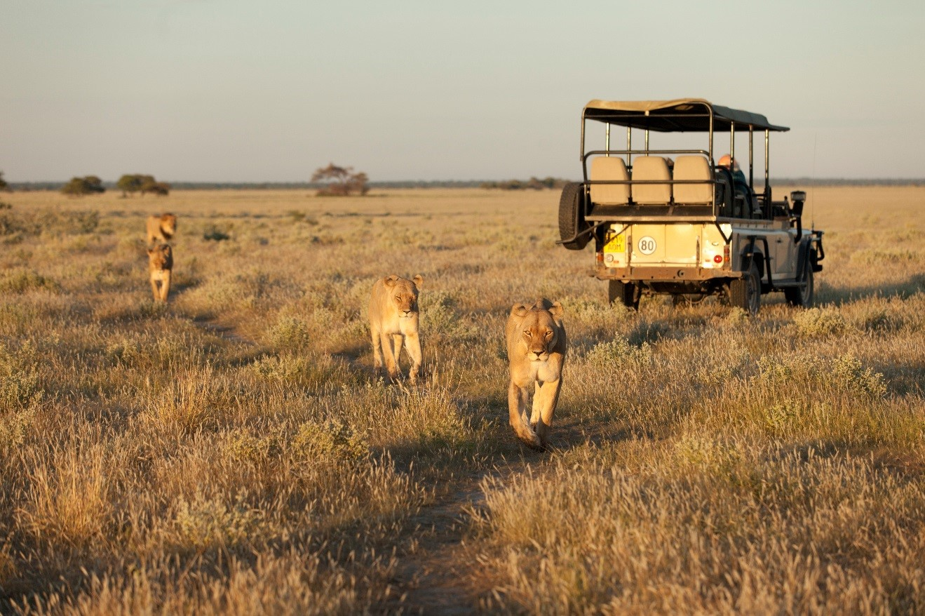 Lions and Nat Hab travelers in Africa.