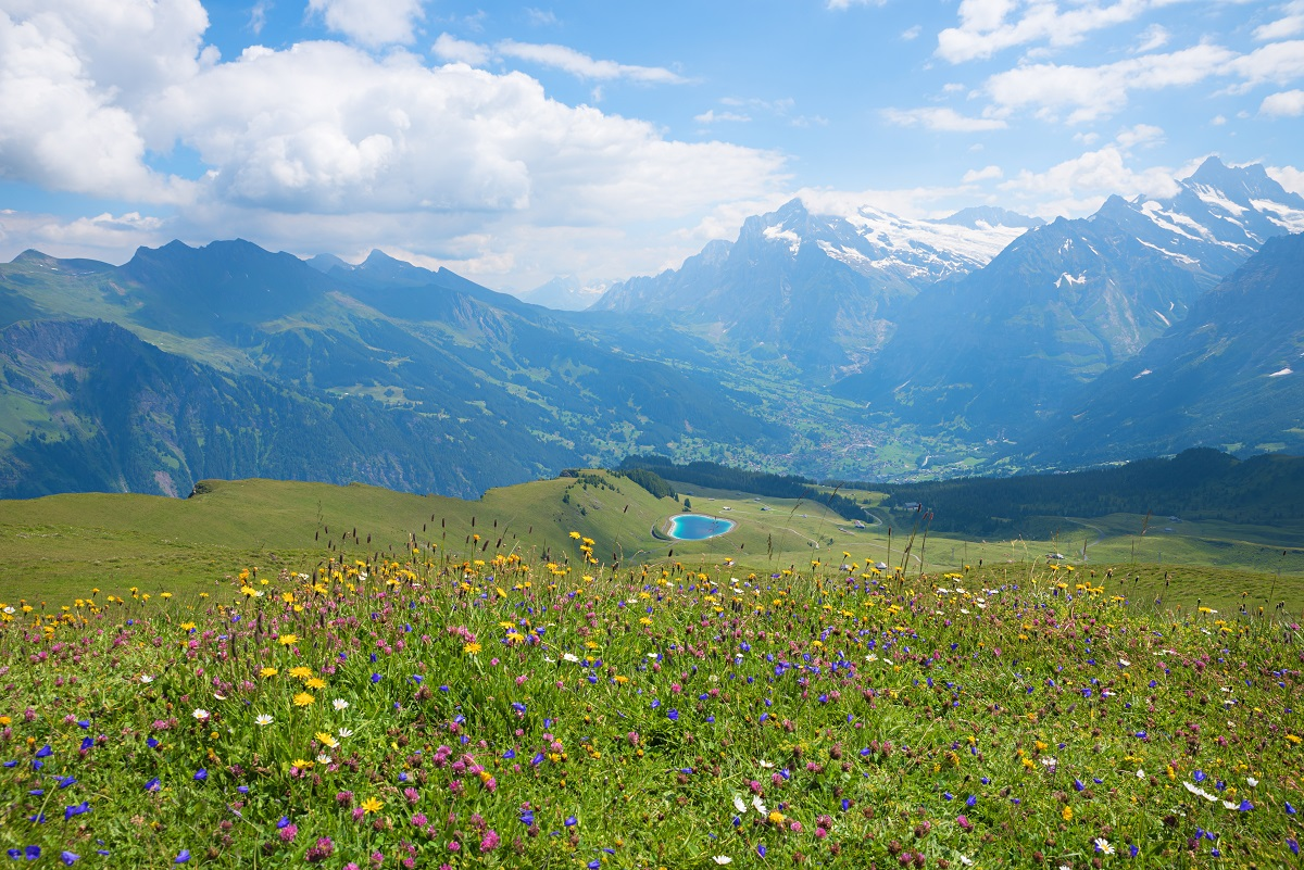 Switzerland's flower-filled meadows.