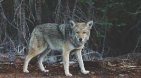 An Absence of Ethics: Wildlife-Killing Contests in Your Backyard