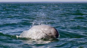 Traveler Story: A Beluga Whale Tour to Remember