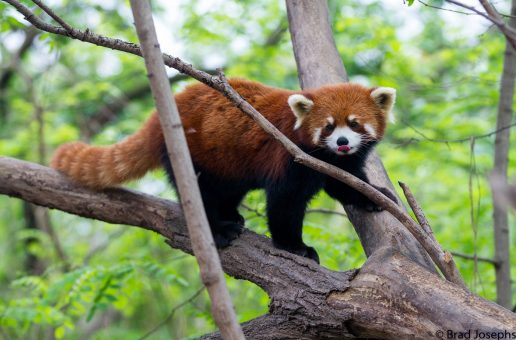 5 Reasons Why China Should Be Your Next Nature Adventure