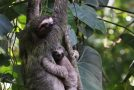 Wildlife Photo of the Week: Hanging on to Mom