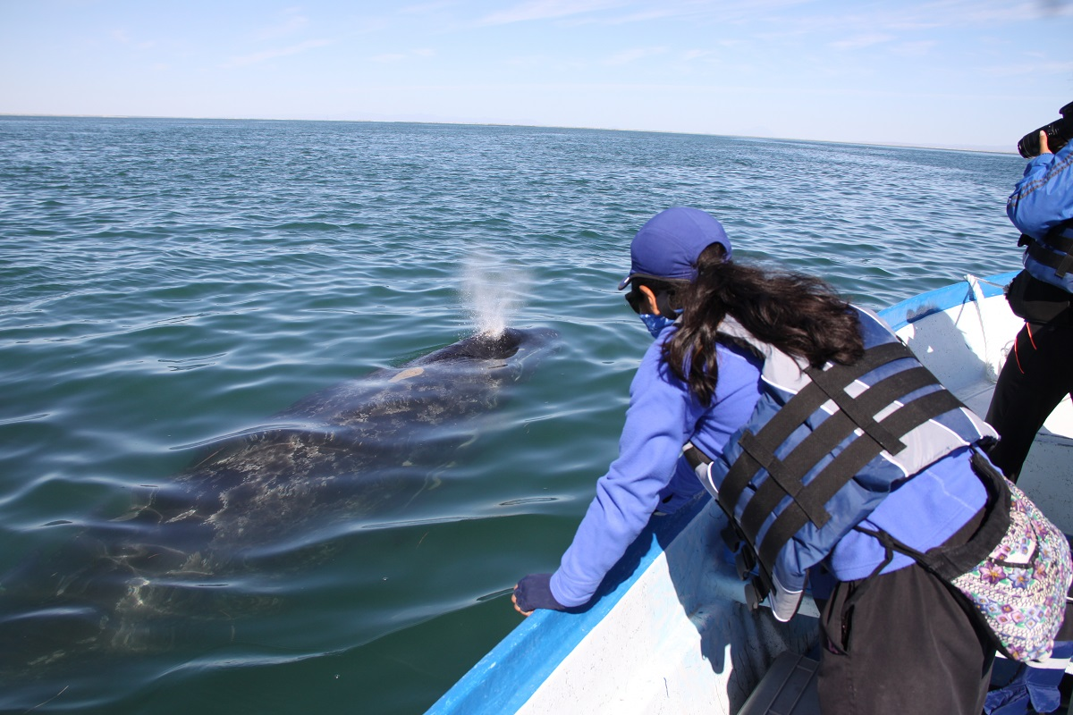 Scientists studying gray whales in Baja, Mexico.