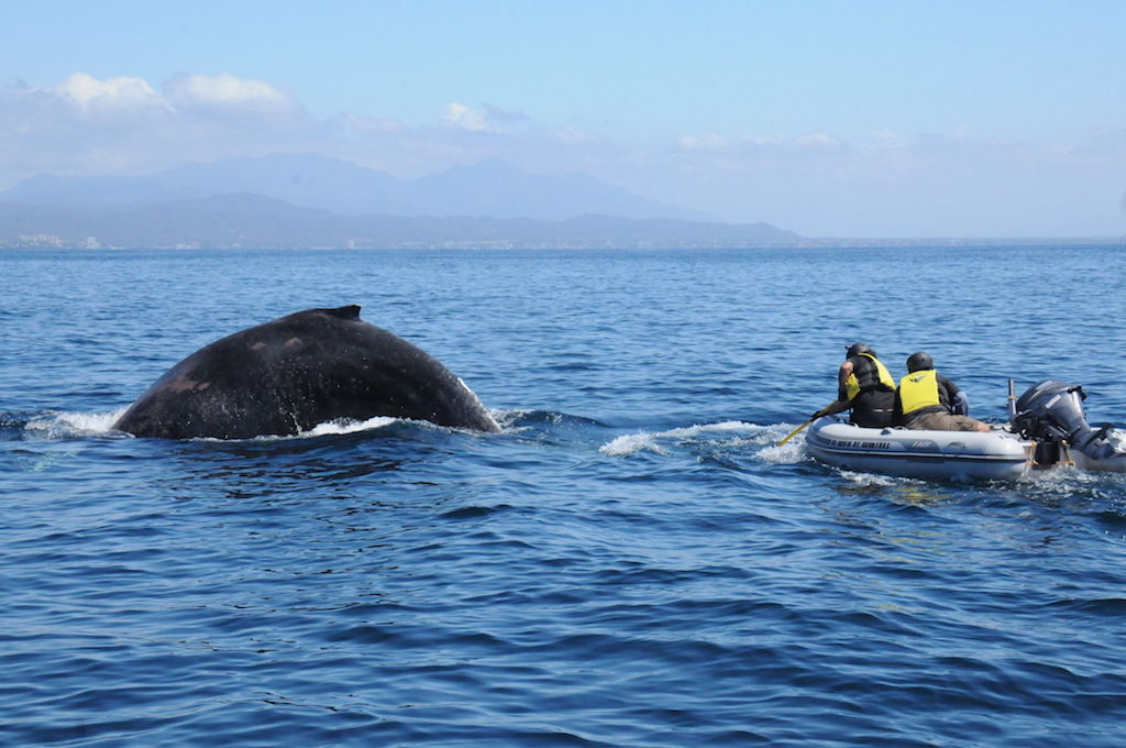 Whale and rescuers in Mexico.
