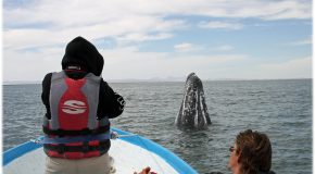 Nat Hab Supports Gray Whale Research in Baja