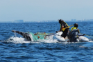 Nat Hab Philanthropy: Whale Disentanglement in Mexico