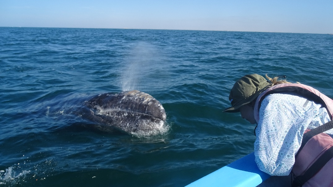 A young girl greets a gray whale in Baja.