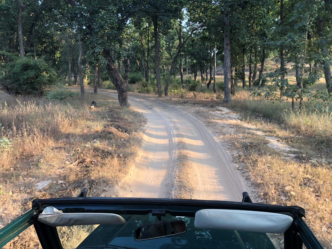 Driving through one of India's national parks in search of tigers.