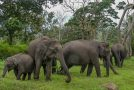 Asian Elephants Have Distinct Personalities Similar to Ours