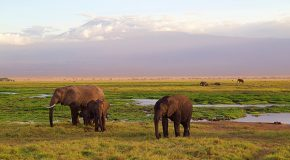 Video: Elephants and Lions Align Against Rhinos