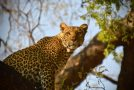Southern Africa Safari: An Intimate View of Predator and Prey