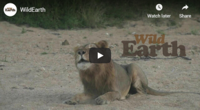 Go on an African Safari—Live from Your Living Room!