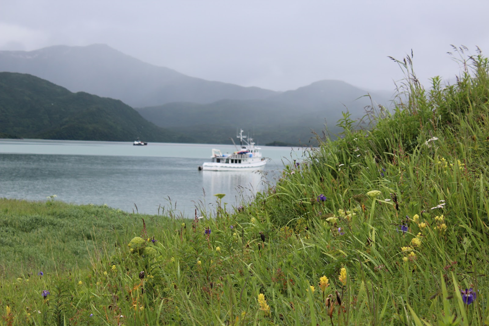 A boat and wildflowers on an grizzly tour in Alaska.