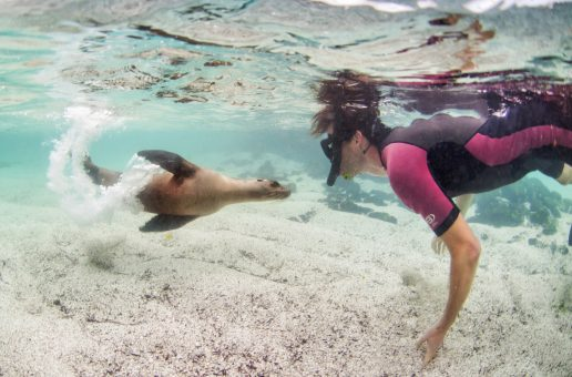 Top 10 Underwater Wildlife Encounters in the Galápagos