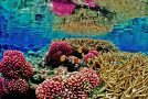 Hope for Coral Reefs in Crisis