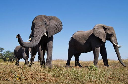 Botswana's Changing Lands: Elephants Not to Blame