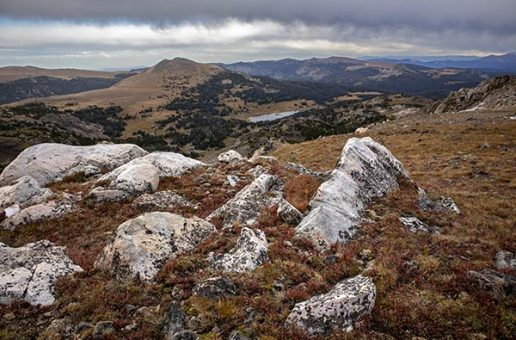 Above the Tree Line in the Greater Yellowstone Ecosystem