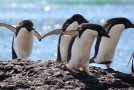 "Where Antarctica Penguins ""Go,"" Biodiversity Follows"