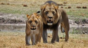 Your Africa Safari Photographs Could Help Save Wildlife