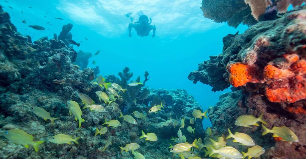 A snorkler looks at coral reefs in the Florida Keys.