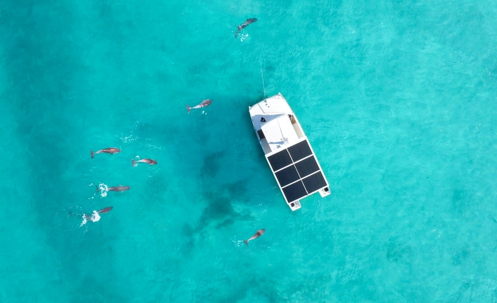 Dolphins swimming near a boat in the Florida Keys