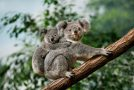 10 Unique Species You Can See in Southern Australia