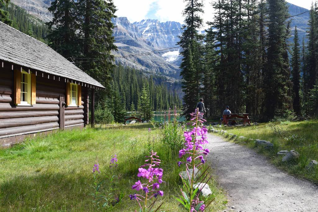 Fireweed is among the many wildflowers found in Yoho National Park.