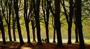 Parks, People, a Pandemic and Problem-Solving
